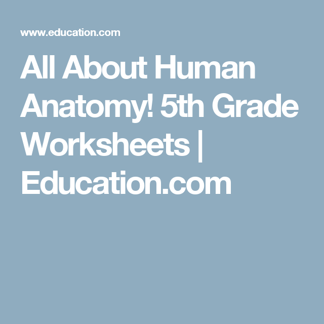 All About Human Anatomy 5th Grade Worksheets Education