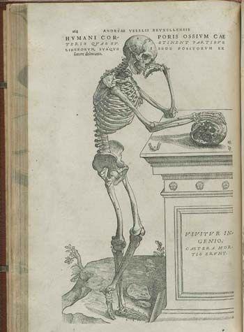 vesalius anatomia | mi interes | Pinterest | Libros antiguos ...