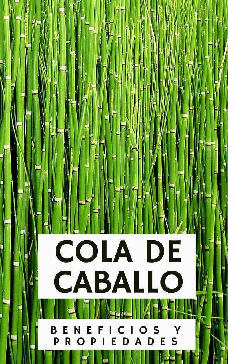 Propiedades Y Beneficios De La Cola De Caballo Plantas Medicinales Hierbas Cola De Caballo Planta Hierba Cola De Caballo