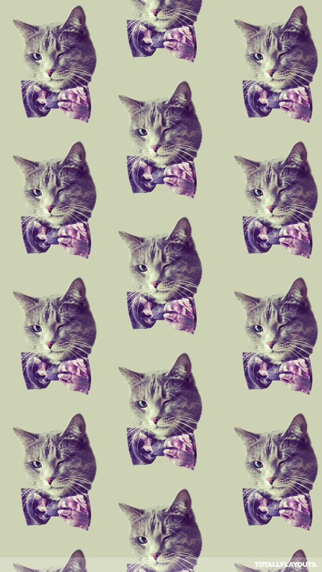 Tabby Cats In Bow Tie Wallpaper