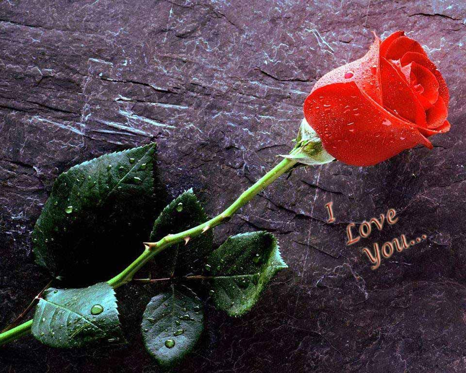 I Love You Images With Roses Love Images Love You Images I