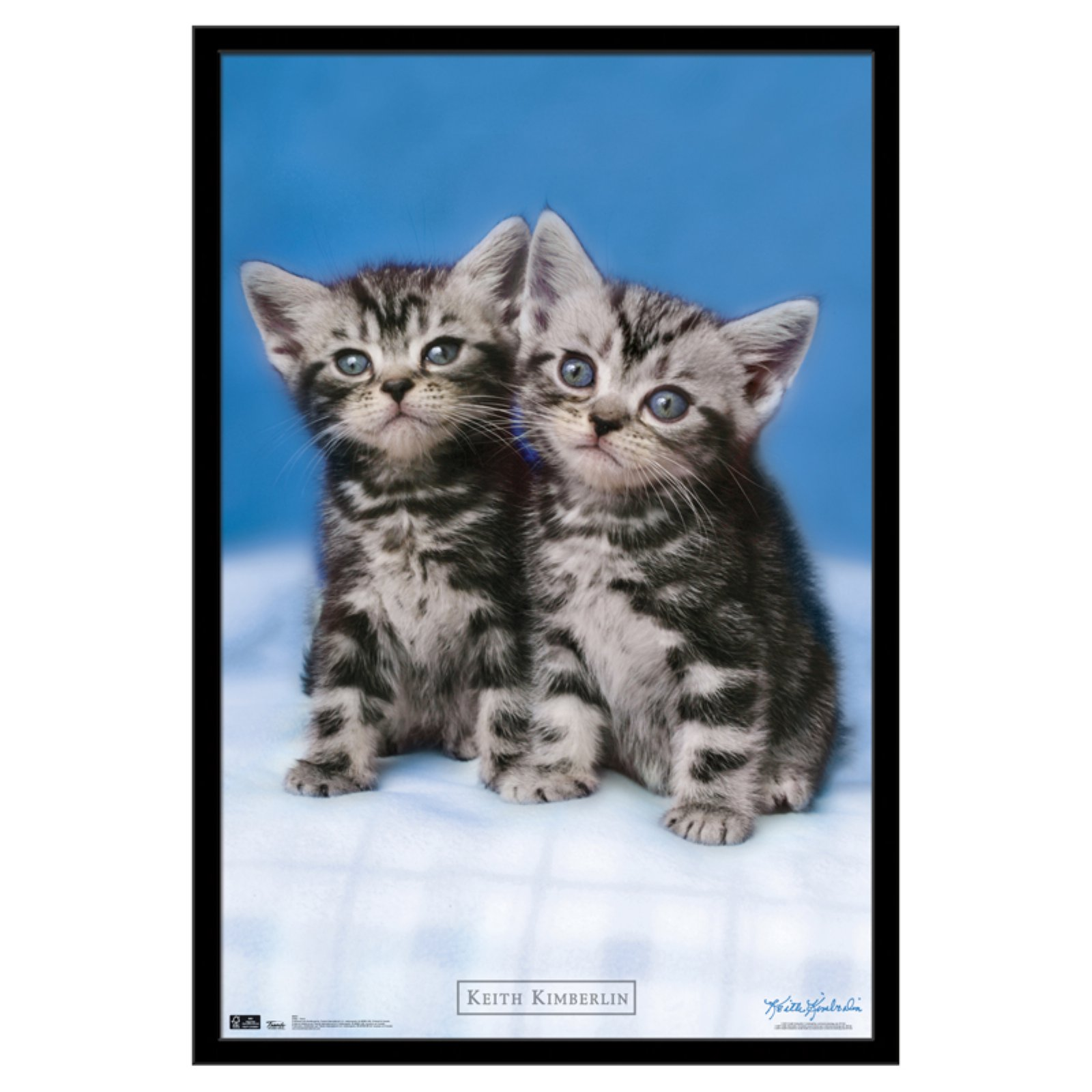 Trends International Kitten Twins Poster Siamese Cats Facts Cat Repellant