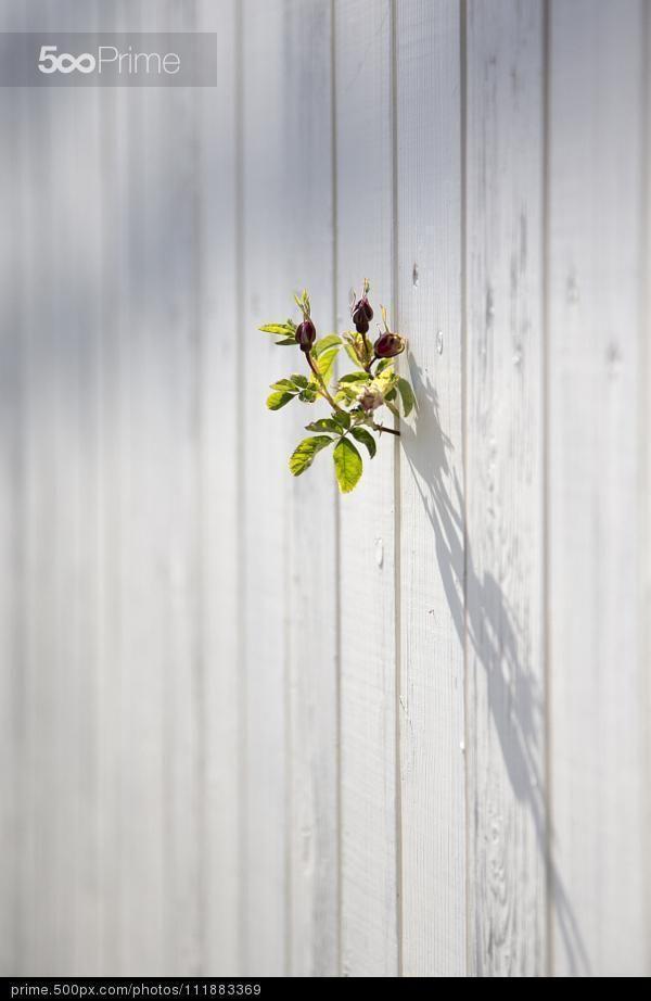 Escape from the garden by Birgit Vaarandi