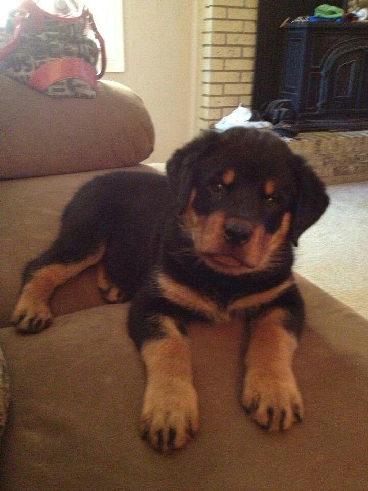 Pin Van Patra Za Op Cute Pets Honden Grote Honden