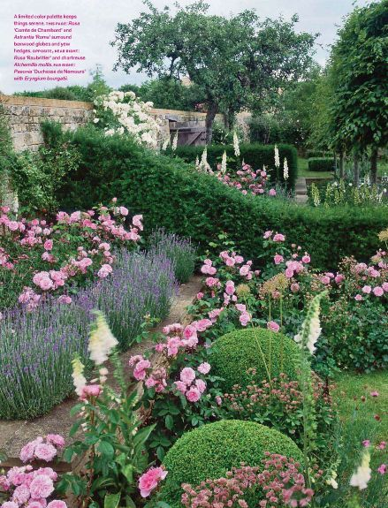 There S Something Romantic About Pink Roses And Lavender Rose Garden Design Romantic Garden Garden Inspiration