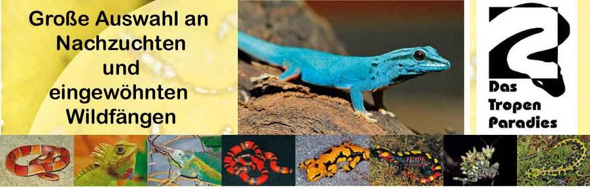Angebote Von Das Tropenparadies Kw 32 Tropen Echse Zoo