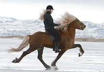 Photo of Ponies on ice comes to Britain for the first time – Horse & Hound