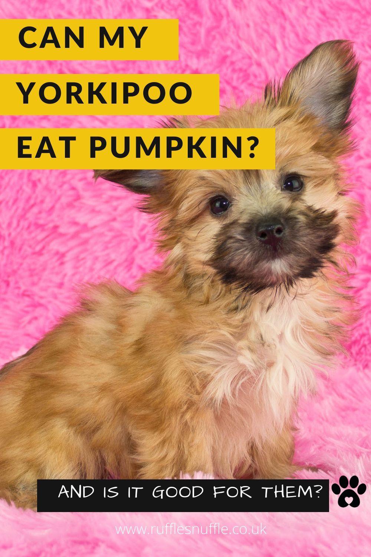 What Animals Eat Pumpkins Uk