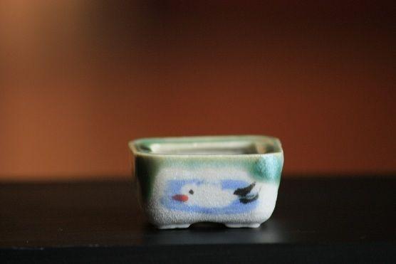 mini bonsai ceramic pot