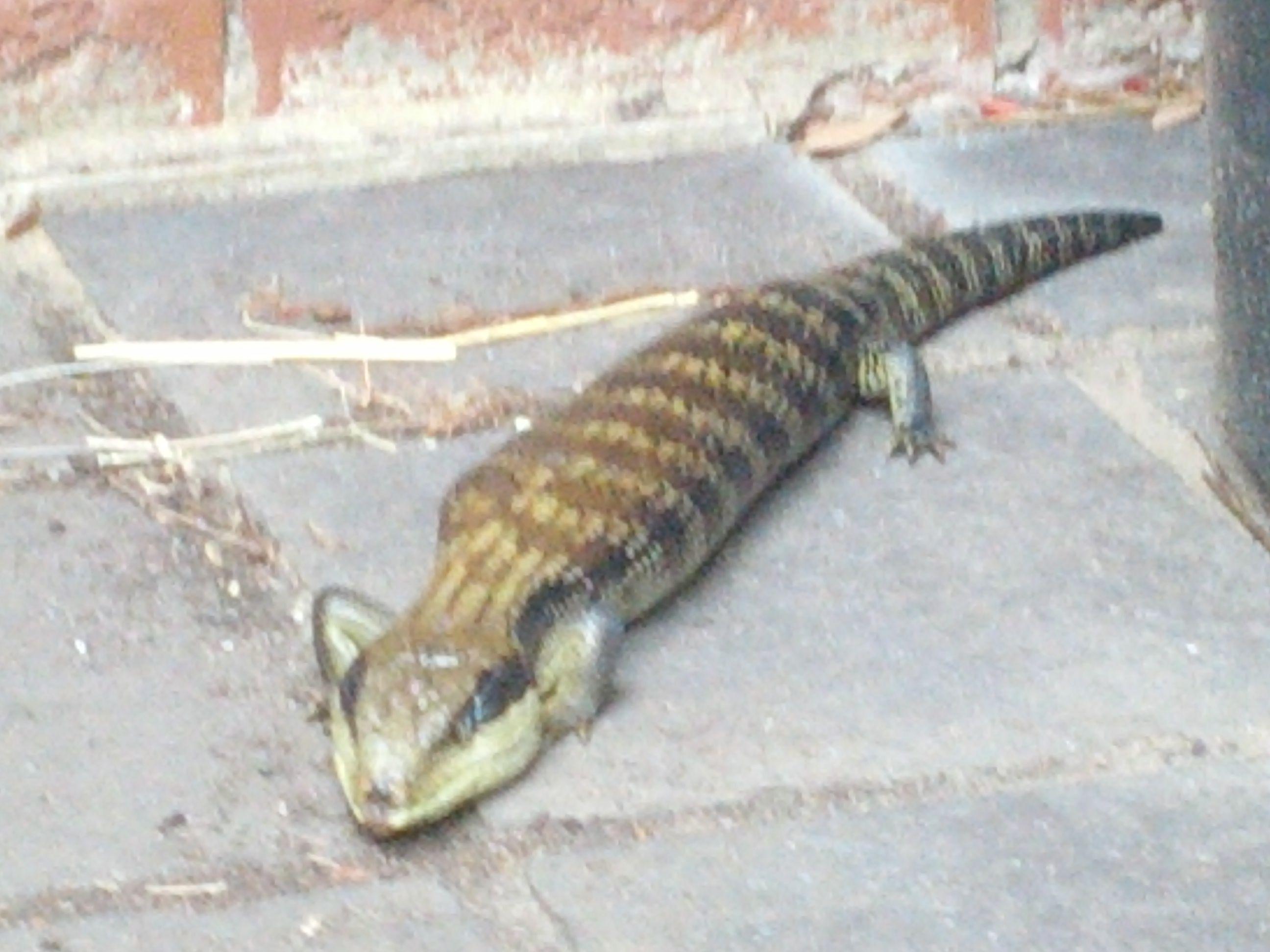 What Do Backyard Lizards Eat | Backyard Ideas