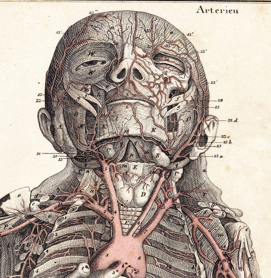 1843 Amazing Victorian ANATOMY engraving, Human ARTERIES ...