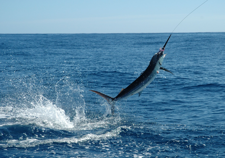 40+ Big game fishing maldives advice