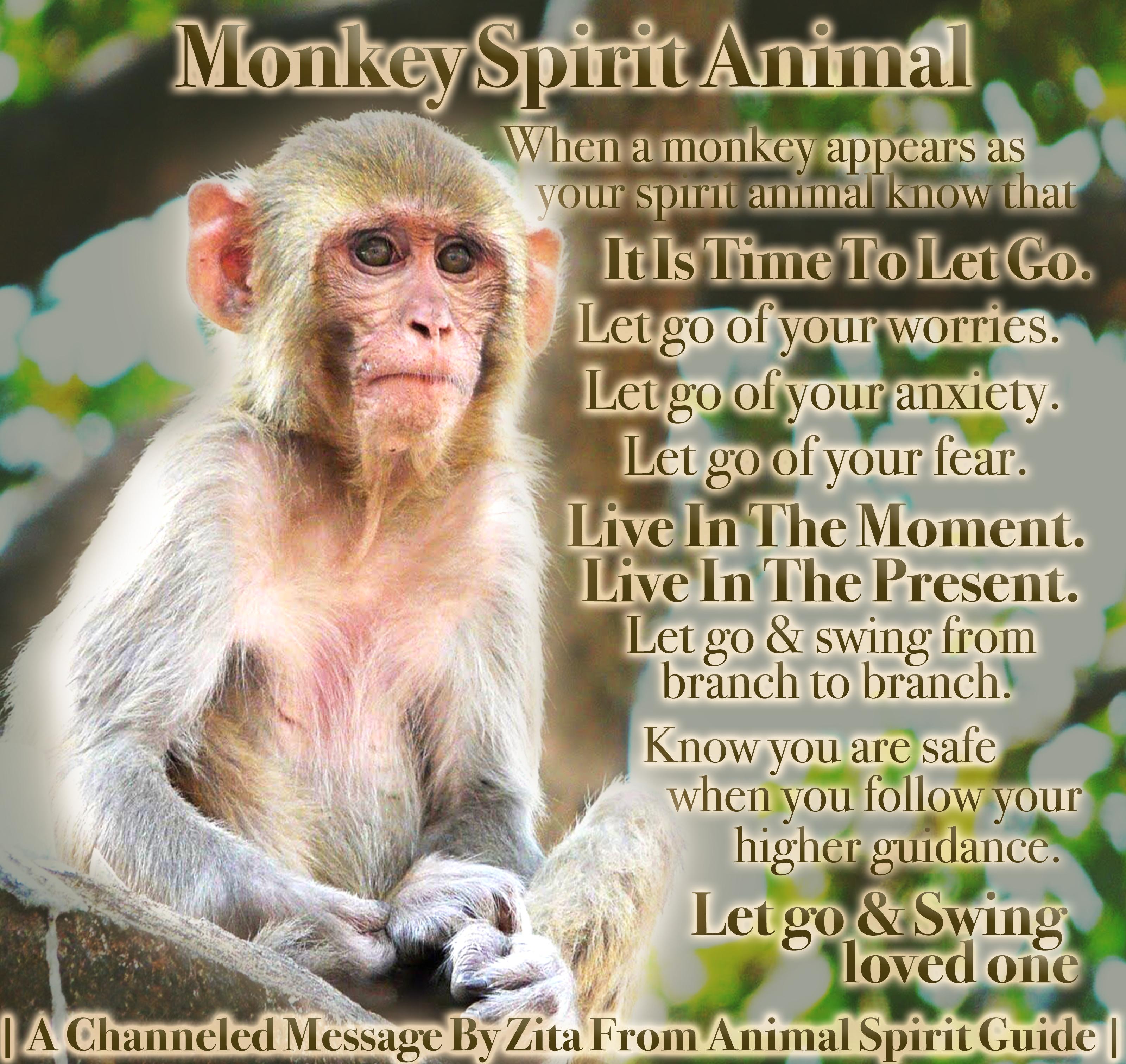 Monkey Spirit Animal In 2020 Spirit Animal Horse Spirit Animal Find Your Spirit Animal