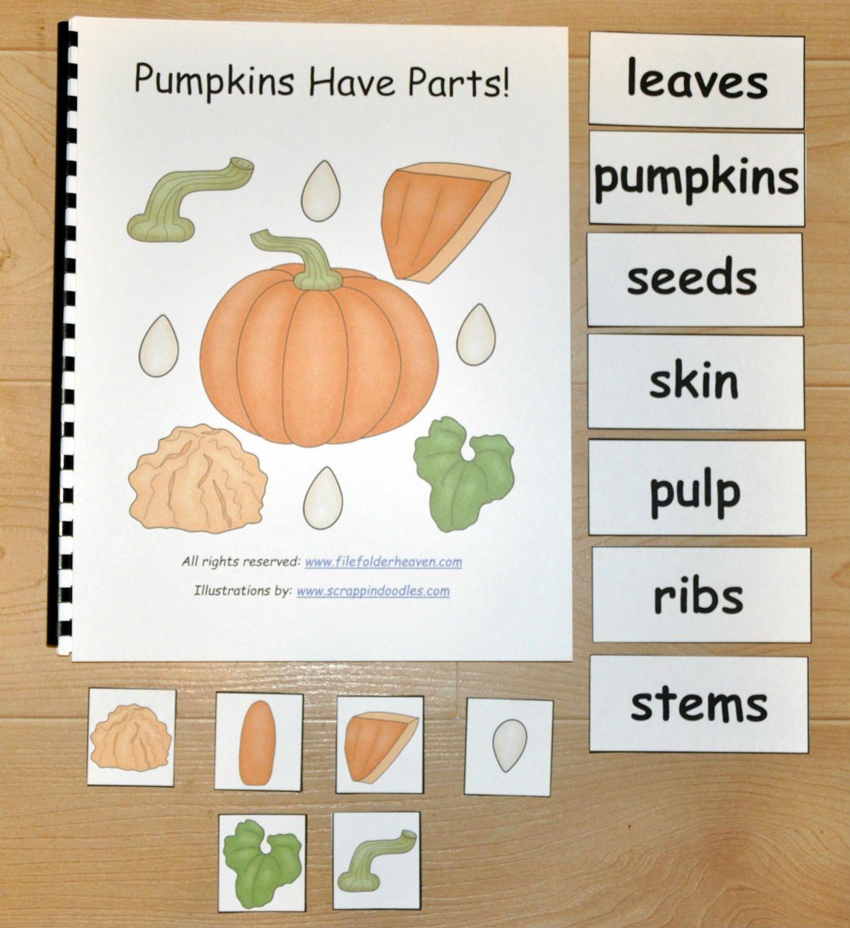 Pumpkins Have Parts Explore Pumpkin Anatomy With Your