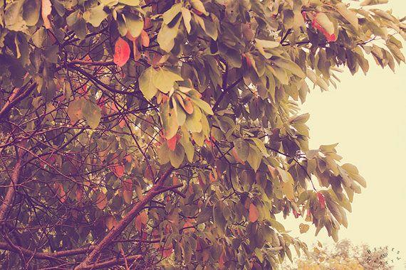 Autumn Home Decor Fine Art Photography Print by bellesandghosts
