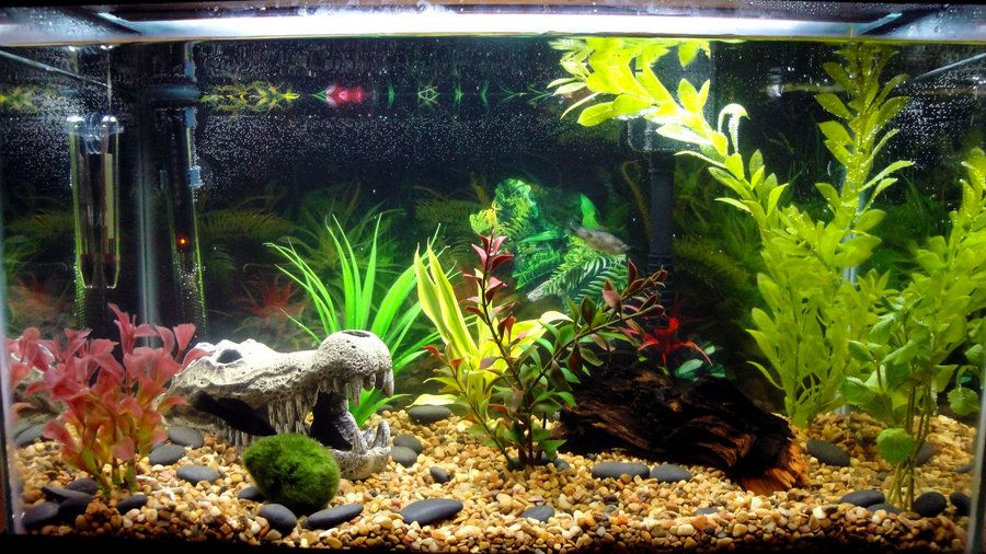 New aquarium setup by abelphee on deviantart abelphee for How to setup a freshwater fish tank