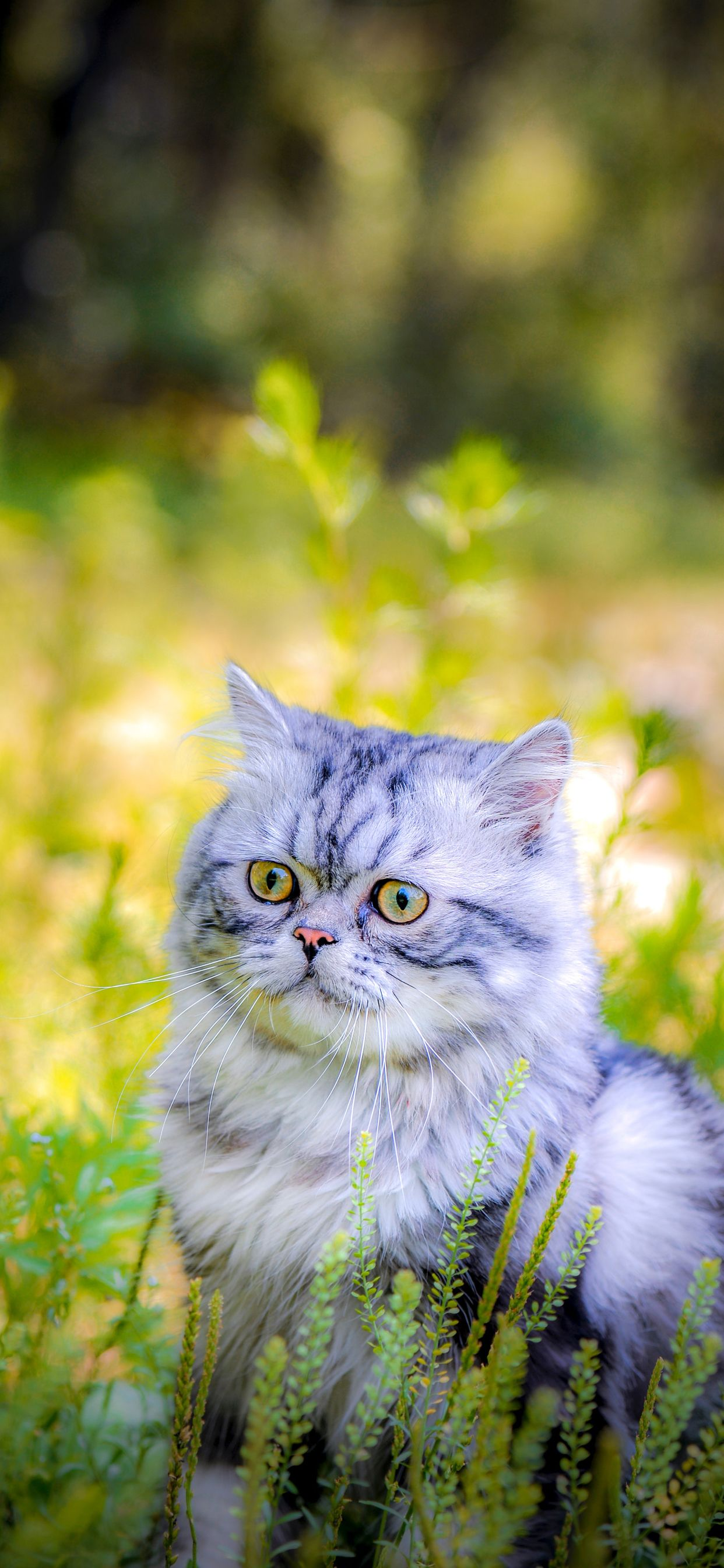 Cat Phone Wallpapers July 2020 I Like Cats Very Much Cat Phone Wallpaper Cute Cat Wallpaper Cat Wallpaper