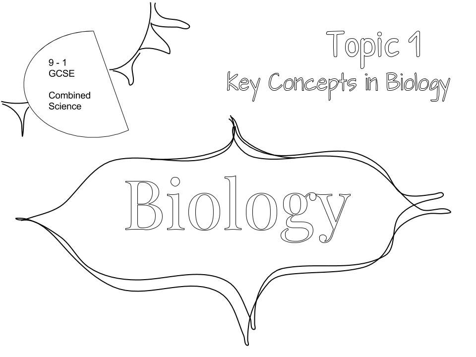 Topic 1 - Key Concepts in Biology Graphic Organiser Graphic