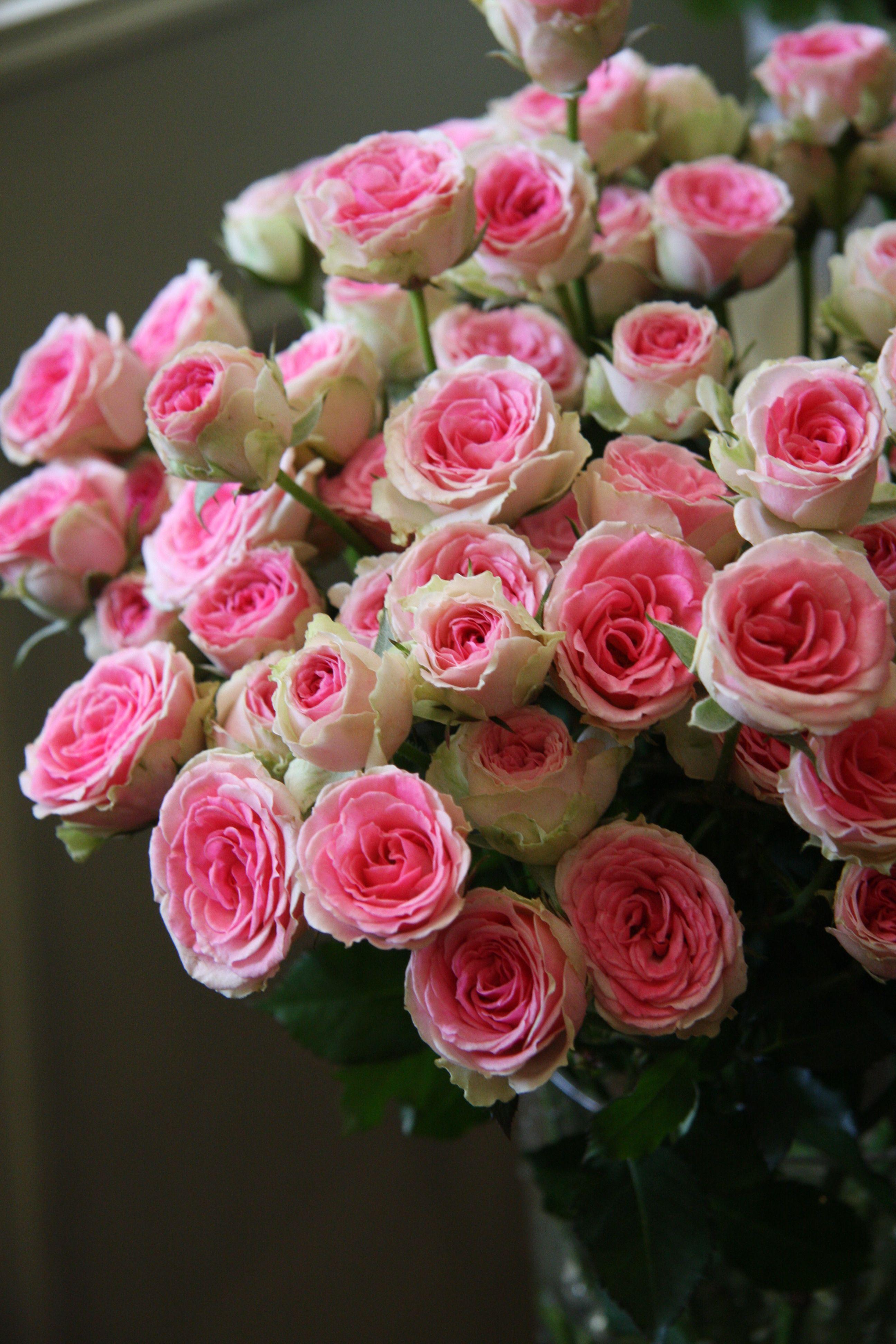 39 mimi eden 39 florists rose mini flora bred by alain. Black Bedroom Furniture Sets. Home Design Ideas