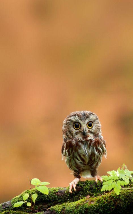 funny owl wallpaper hd funny owl wallpaper hd download iphonefunny owl wallpaper hd funny owl wallpaper hd download