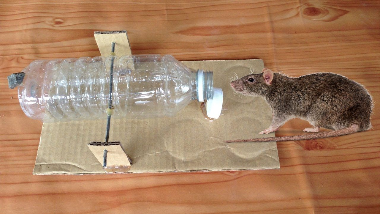 Plastic Bottle Mouse Traps In Cambodia 2 How To Make Rat Traps Using Jardinage