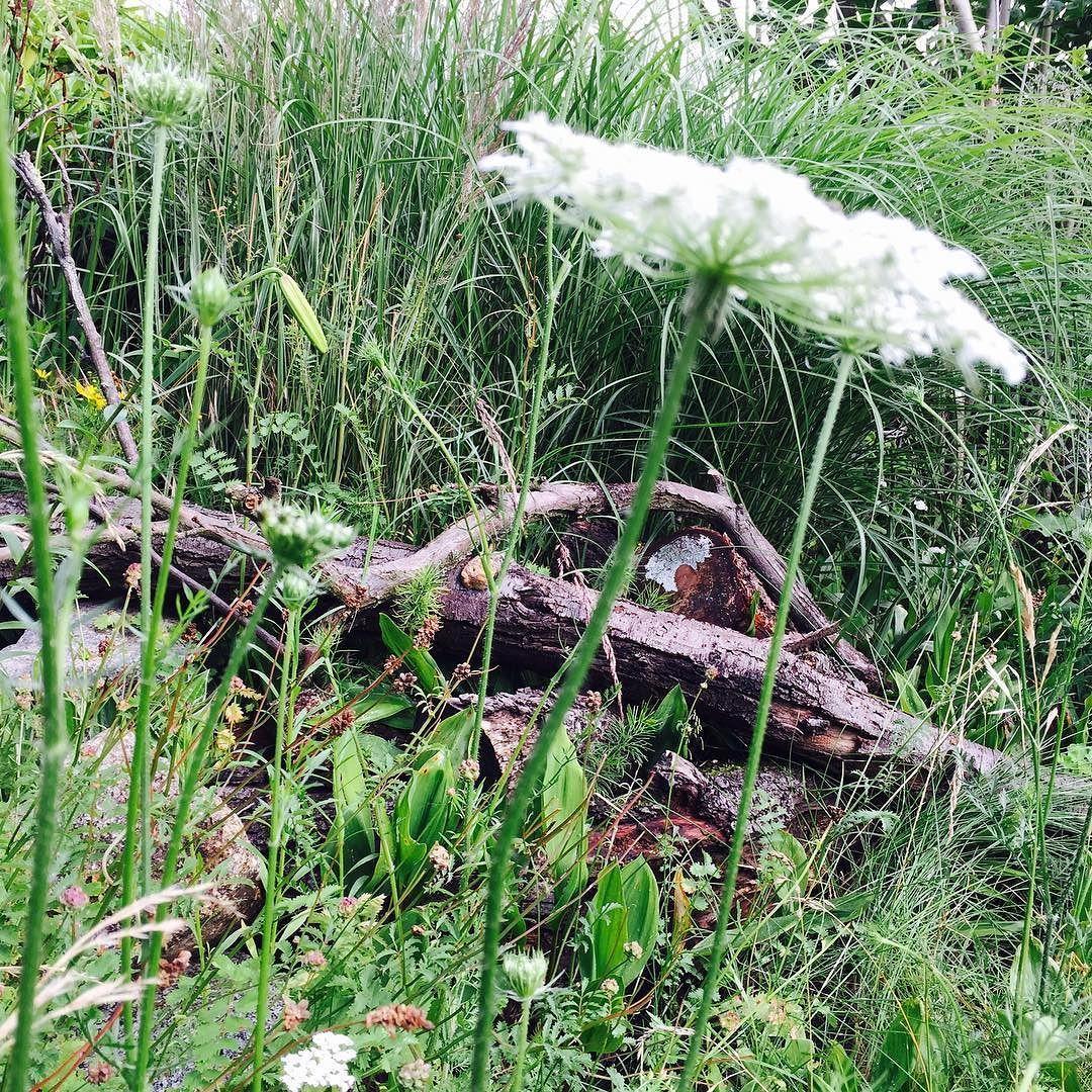 Die Wilde Ecke Im Garten Th Wild Corner In The Garden Totholzhaufen Schonesunkraut Insekten Eidechsen Wild Urbangarden Sch Garden Design Plants Garden
