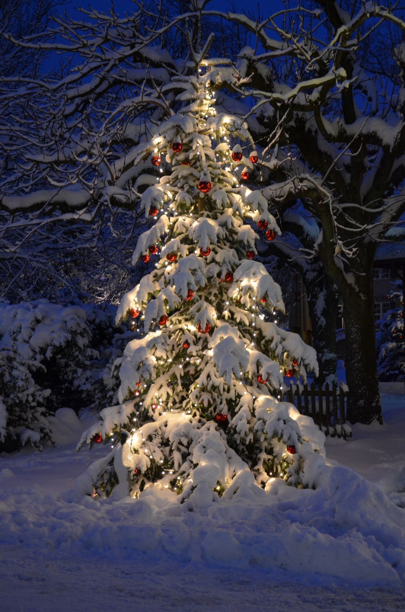 Winter Christmas Tree Outdoor Christmas Tree At Night With Lights And Snow Outdoor Christmas Tree Christmas Scenery Outdoor Christmas