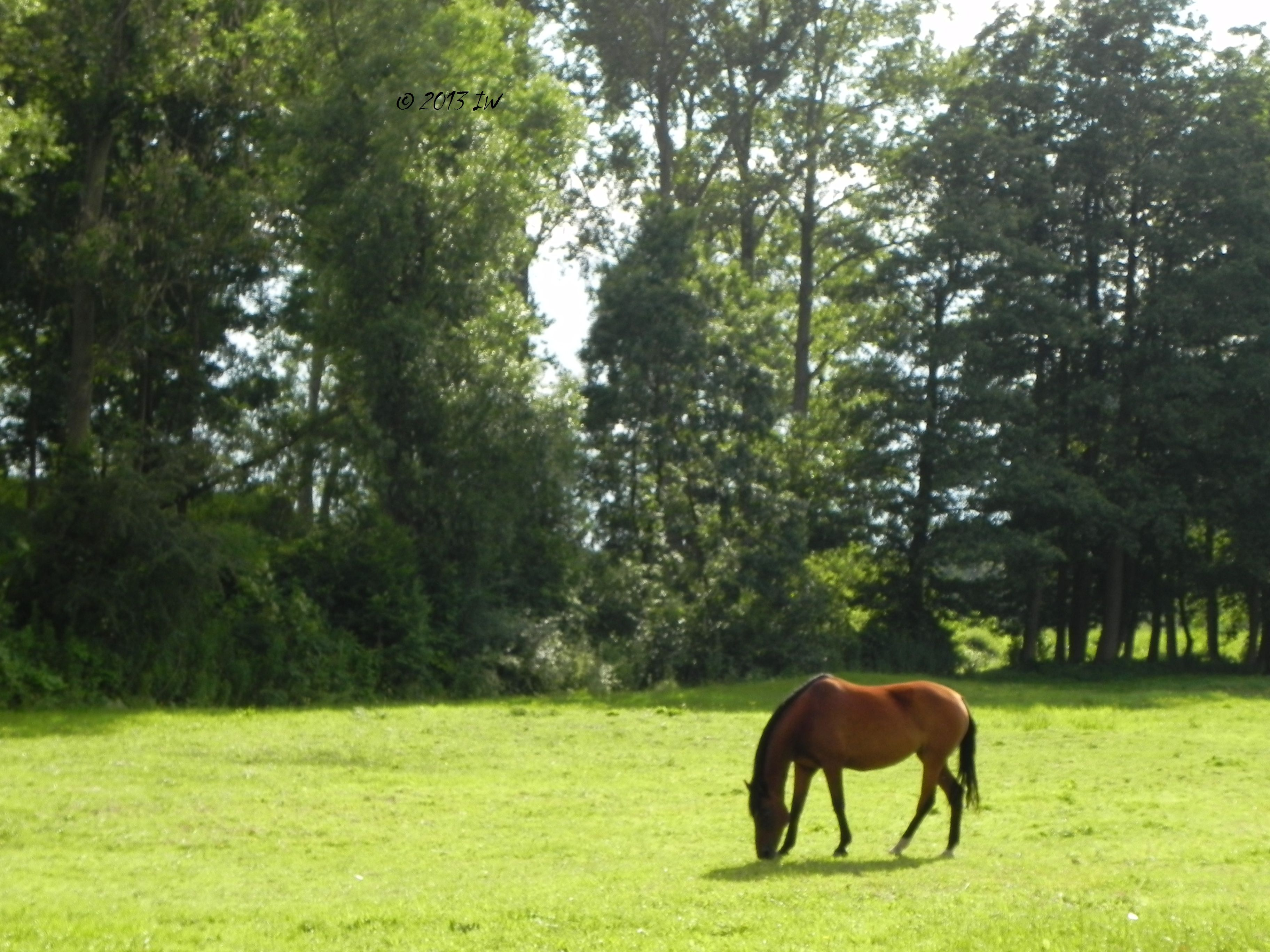 Horse at Usedom, Germany