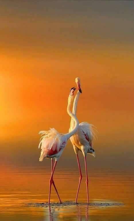 """beautiful """"  vögel als haustiere natur tiere"""