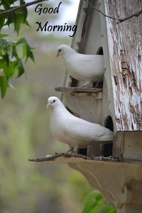 Love Birds Good Morning Wallpaper : Good Morning Love Birds Good Morning! Pinterest Love birds, Good morning love and Good morning