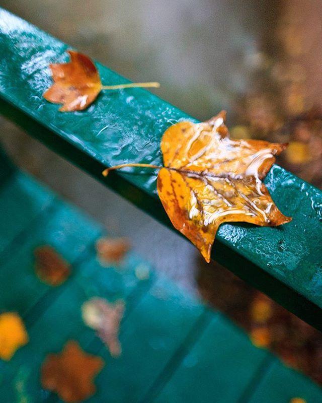 Instagram Photo By صور تصاميم Oct 27 2015 At 7 43am Utc Autumn Leaves Autumn Beauty Seasons