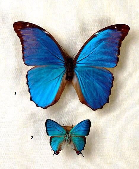 #butterfly #colorful #beautiful #ilove