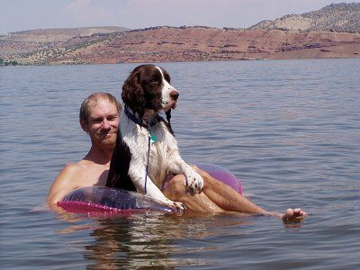 Springer Spaniel Can You Please Move Over With Images Springer Spaniel English Springer Spaniel English Springer