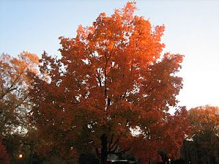 tree aflame