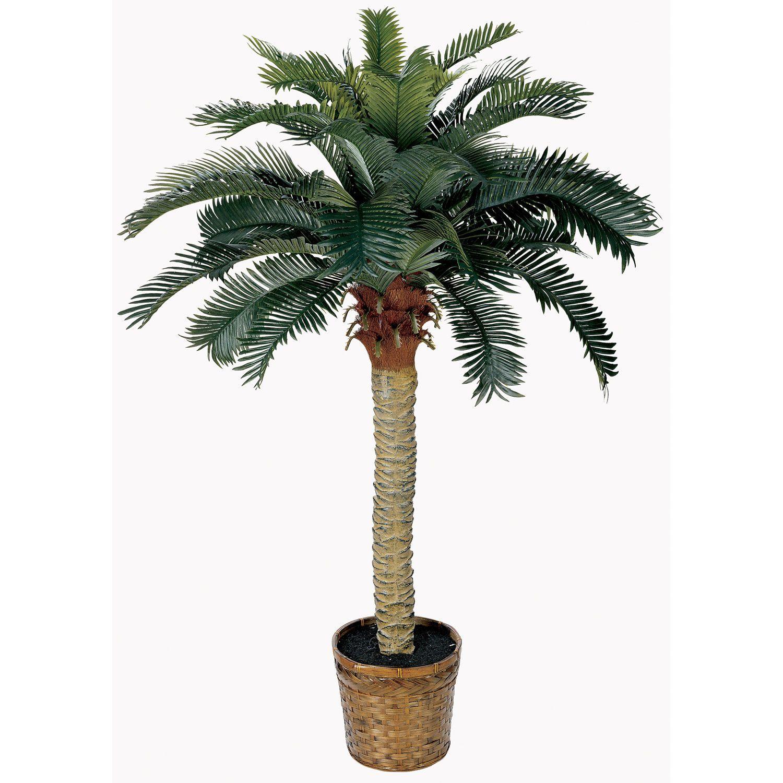U sago silk palm tree beachy keen pinterest palm palm trees