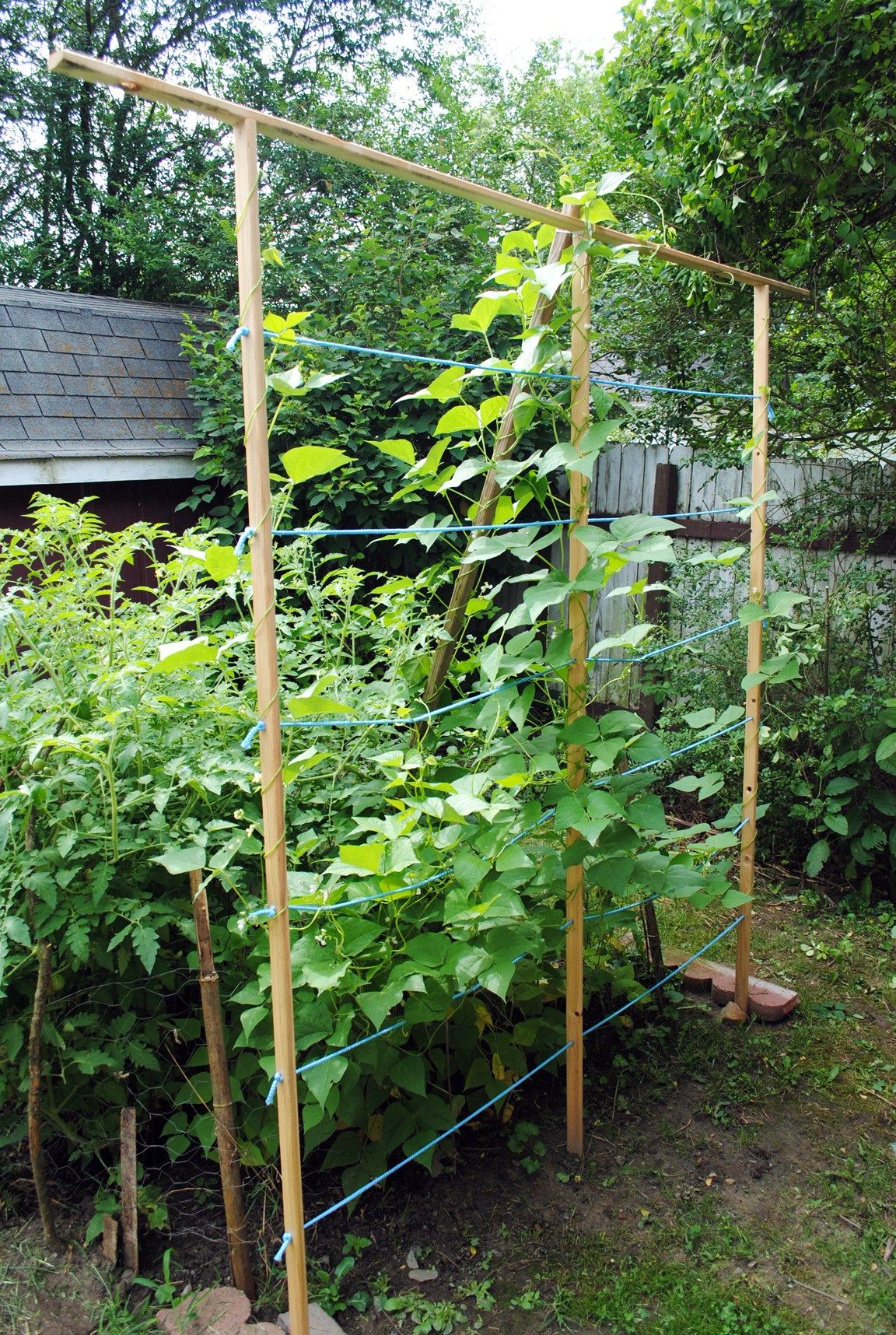 7+ Awesome DIY Garden Trellis Projects for your Home | Pinterest ...