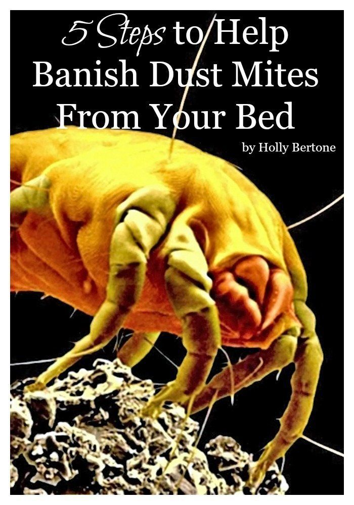 5 Steps To Help Banish Dust Mites From Your Bed Dust Mites Dust