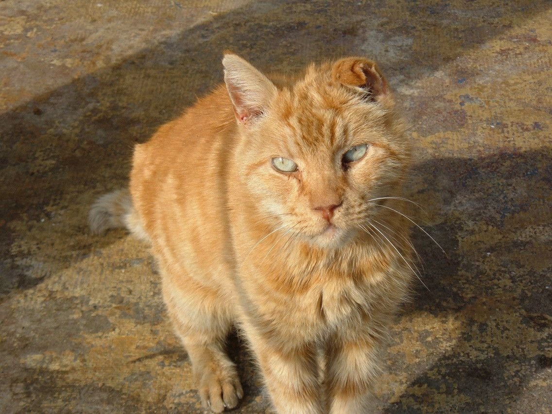 This guy was a stray in my backyard years ago ? we called ...