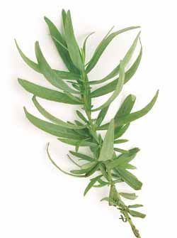 French Tarragon Culinary Medicinal Duration Perennial Hardy In Zones 4 7 The True Tarragon Which Does Not Pro Planting Herbs Growing Herbs Plant Leaves