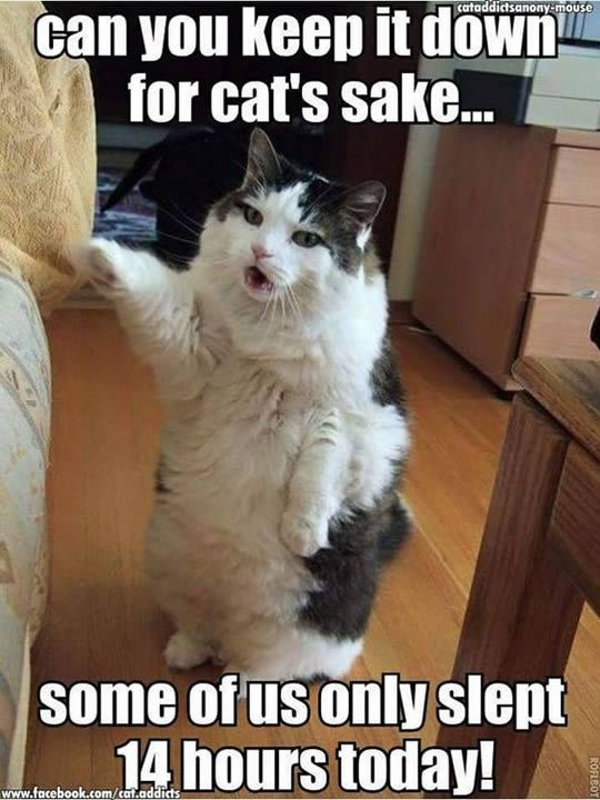 Funny Cat Memes Sleep 14 Hours A Day Funny Animal Pictures Funny Cat Memes Funny Animals