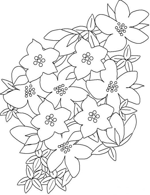 Purplesaxifrage Flowers Coloring Pages Coloring Page