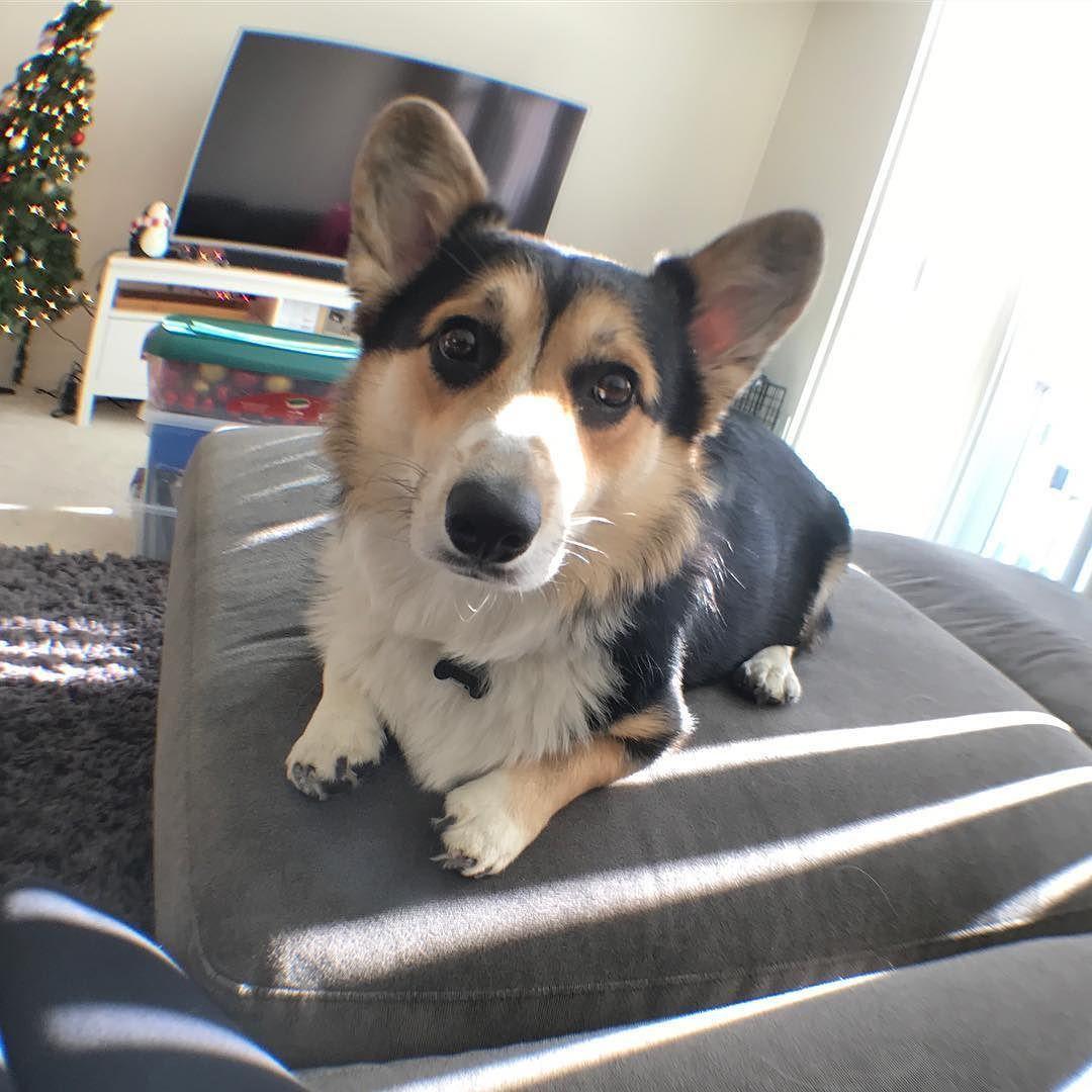 Testing Out Mom S Christmas Present A Fisheye Lens Christmas
