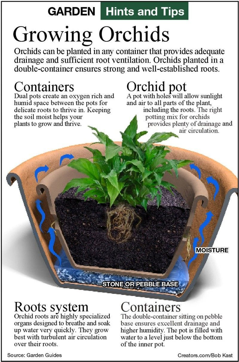 For orchids to grow best they need the right pot and soil