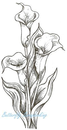 Calla Lily Drawing Buscar Con Google Lilies Drawing Flower Drawing Flower Sketches