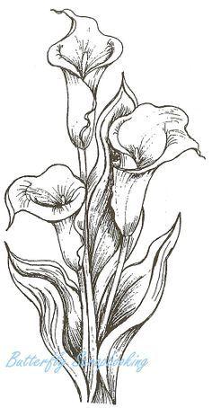 Calla Lilies Drawing Flowerart on pinterest water bliliesb