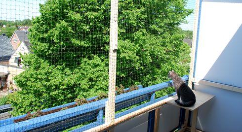 handwerkern f r einen katzensicheren balkon mias katzenwelt katzen pinterest katze. Black Bedroom Furniture Sets. Home Design Ideas