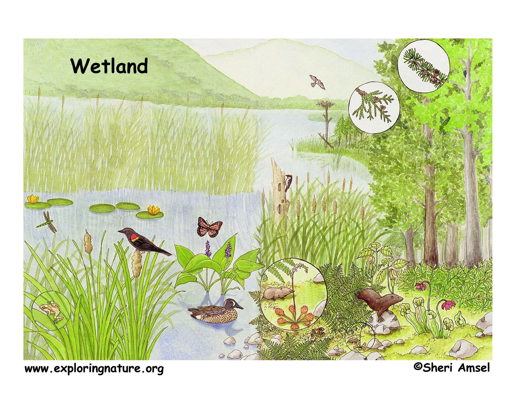 Wetlands Printable Worksheets Learning How To Read