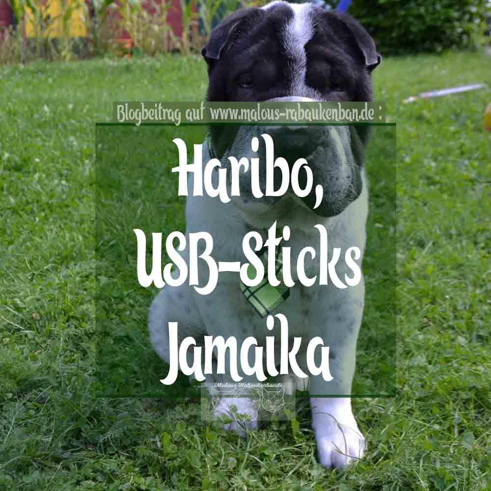Haribo Usb Sticks Und Jamaika Malous Rabaukenbande Welpen Jamaika Alles Fur Den Hund