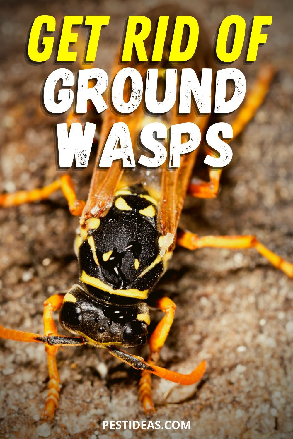 Get rid of ground wasps in 2020 natural pest control