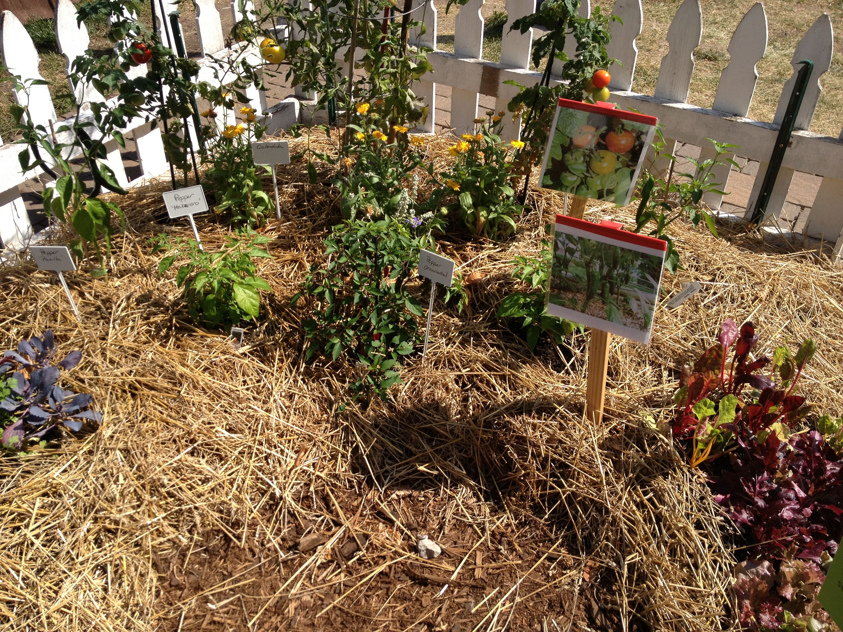 Straw bale gardening   Homesteading & Self Sufficiency   Pinterest ...